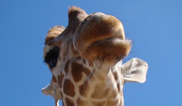 Paphos ZOO: Лицензированный зоопарк на Кипре