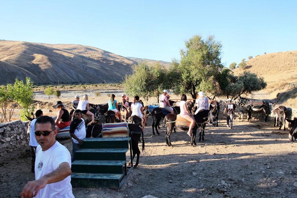 Donkey_yard
