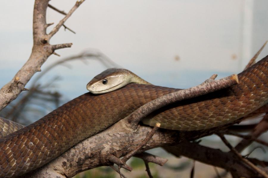 P_Zoo_snake_4
