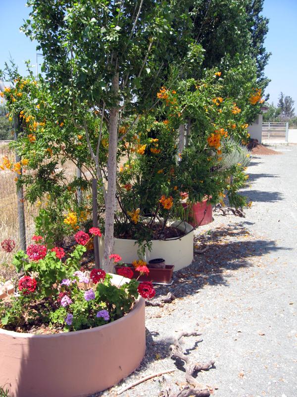 Жизнь на Кипре. Частная английская школа ISOP.