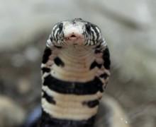 Змеи на Кипре