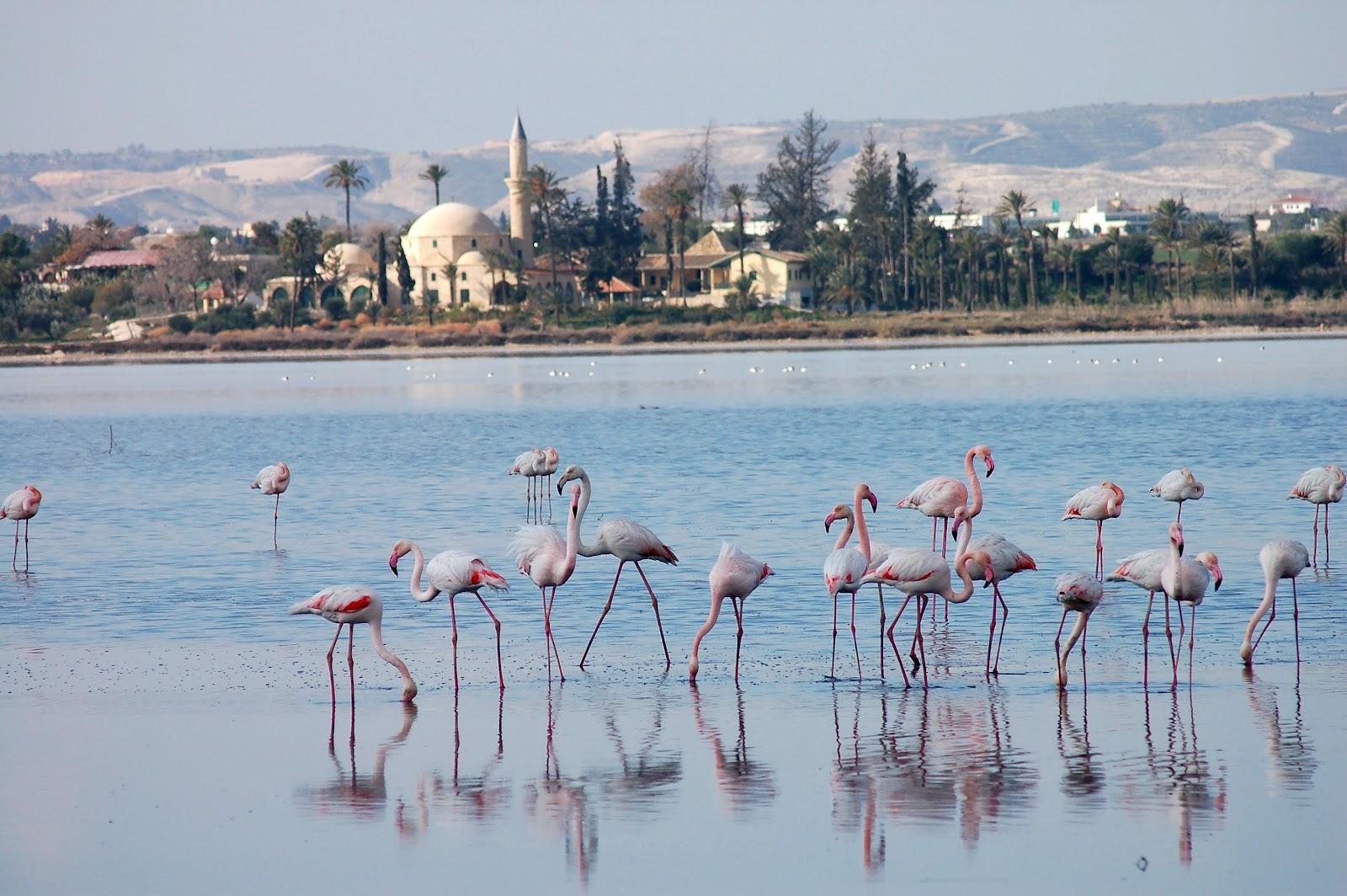 Соленое озеро Фламинго