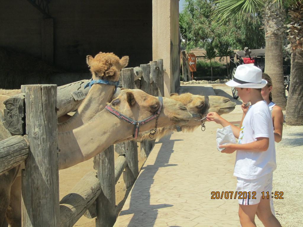Парк верблюдов на Кипре