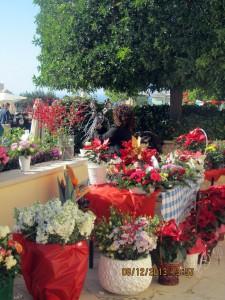 Рождественские цветы на Кипре