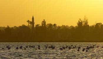 Salt-Lake-Flamingo