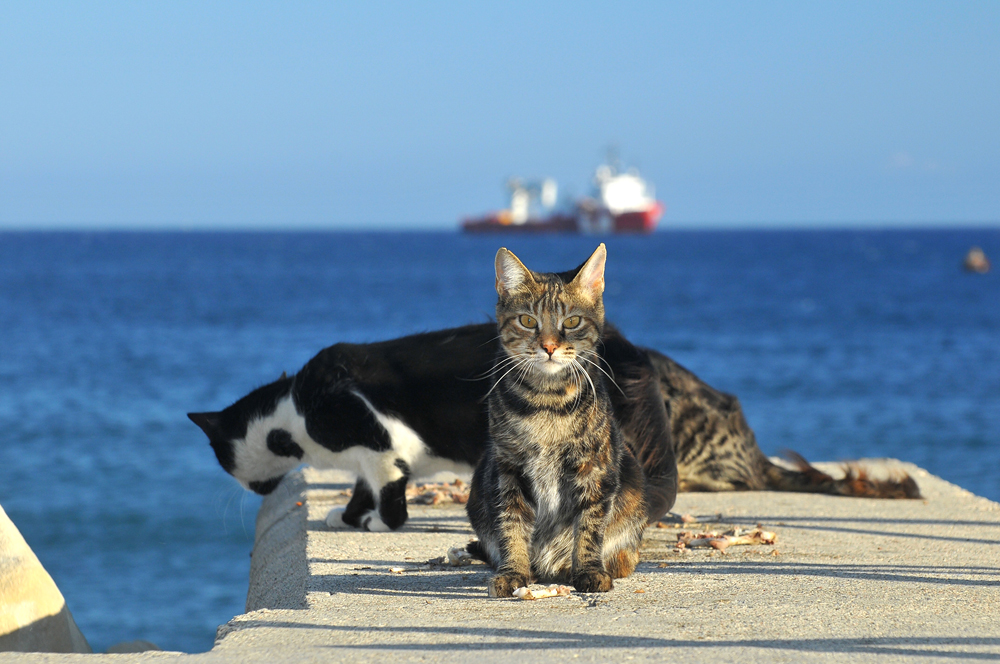cats in Cyprus