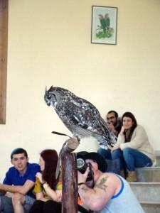 Шоу попугаев