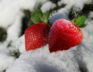 Клубника на снегу