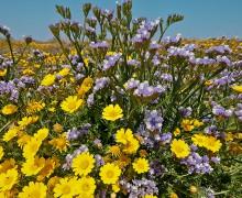 Cyprus spring