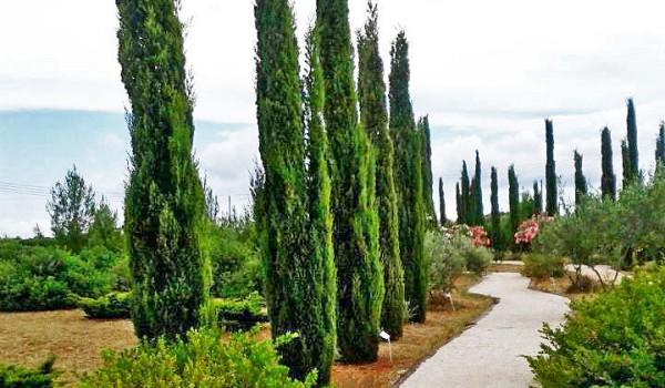 CYHERBIA. Парк для любителей природы и приключений