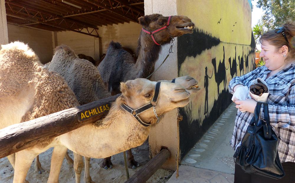 Верблюжий парк в Мазотосе