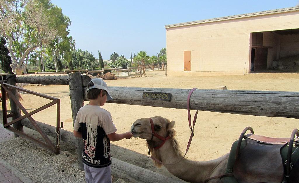 Парк верблюдов в Мазотосе