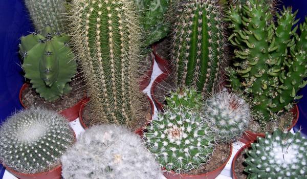 8-я ежегодная выставка кактусов и суккулентов