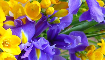 Фестиваль цветов в Лимассоле