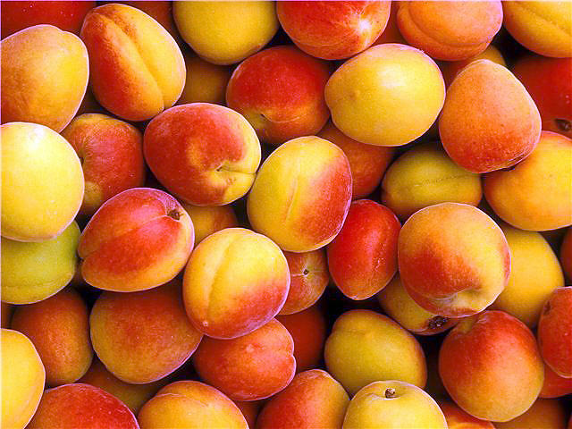 apricots in Cyprus