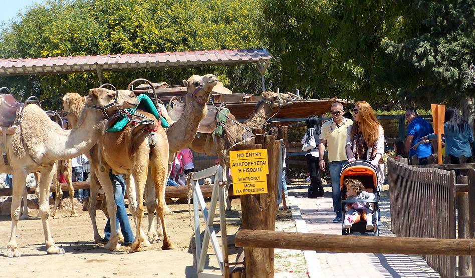 Парк верблюдов в Mazotos