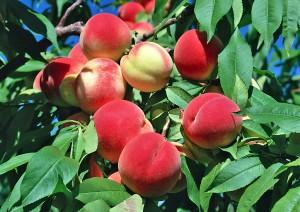 Персики на Кипре