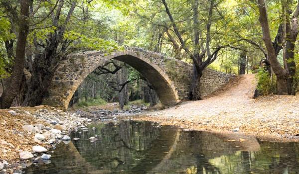 Венецианские мосты — лесные стражи древней эпохи