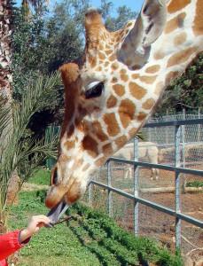 Зоопарк в Пафосе