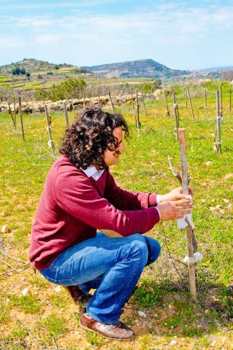 Маркос на винограднике