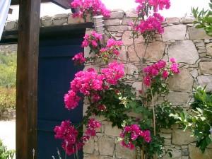 Местные жители создают уют и красоту в каждом уголке деревни