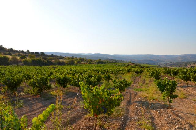 Виноградники Агиос Амбросиос