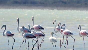 Соленое озеро Акротири