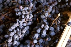 Подсушенный виноград