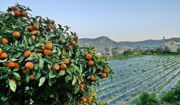 Сельское хозяйство Кипра: поиск путей решения проблем