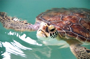 a turtle on a Cypriot beach
