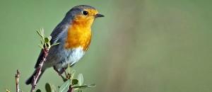 Птицы на Кипре