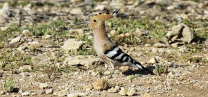 birds in Cyprus