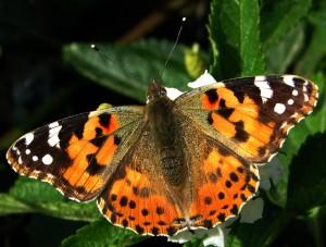 a butterfly in Cyprus