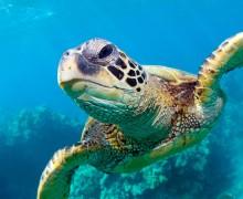 Черепаха в море на Кипре