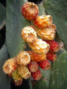 Cyprus' cactus fruit