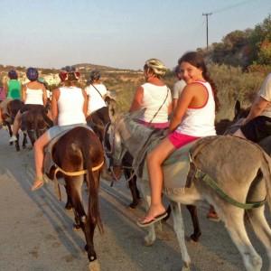 Ферма осликов Golden Donkeys